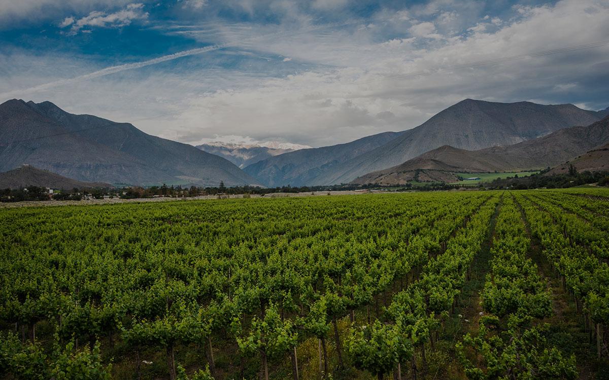Diplomado-en-Gestion-e-Inocuidad-en-el-Sector-Agroalimentario